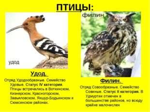 ПТИЦЫ: Удод. Отряд Удодообразные. Семейство Удовые. Статус IV категория. Птиц