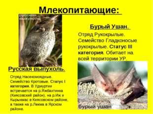 Млекопитающие: Русская выпухоль. Отряд Насекомоядные. Семейство Кротовые. Ста