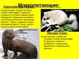 Млекопитающие: Европейская Норка. Отряд Хищные. Семейство Куньи. Статус I кат