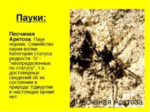 Пауки: Песчаная Арктоза. Паук норник. Семейство пауки-волки. Категория статус