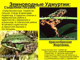 Земноводные Удмуртии: Съедобная Лягушка. Отряд Бесхвостные. Семейство Лягушки
