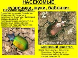 НАСЕКОМЫЕ кузнечики, жуки, бабочки: Пахучий красотел. Отряд Жестокрылые. Семе