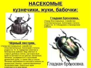 НАСЕКОМЫЕ кузнечики, жуки, бабочки: Чёрный пестряк. Отряд жесткокрылые. семей