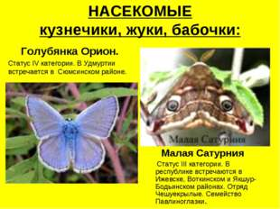 НАСЕКОМЫЕ кузнечики, жуки, бабочки: Голубянка Орион. Статус IV категории. В У