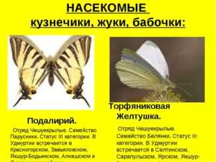 НАСЕКОМЫЕ кузнечики, жуки, бабочки: Подалирий. Отряд Чешуекрылые. Семейство П