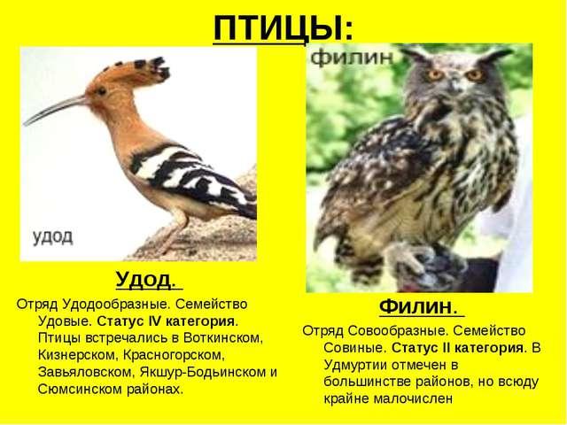 ПТИЦЫ: Удод. Отряд Удодообразные. Семейство Удовые. Статус IV категория. Птиц...