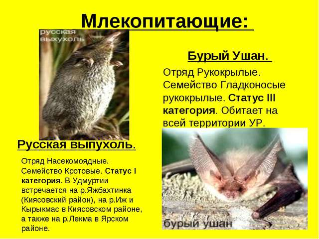 Млекопитающие: Русская выпухоль. Отряд Насекомоядные. Семейство Кротовые. Ста...