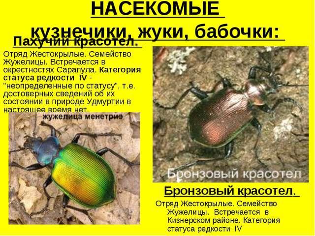 НАСЕКОМЫЕ кузнечики, жуки, бабочки: Пахучий красотел. Отряд Жестокрылые. Семе...