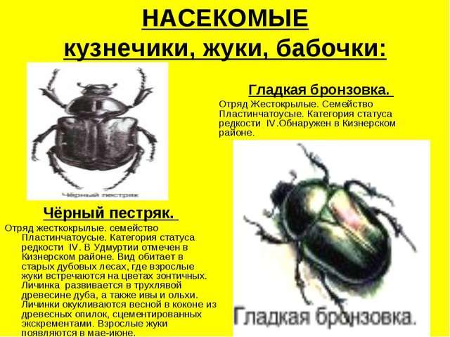 НАСЕКОМЫЕ кузнечики, жуки, бабочки: Чёрный пестряк. Отряд жесткокрылые. семей...