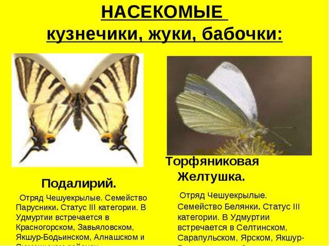 НАСЕКОМЫЕ кузнечики, жуки, бабочки: Подалирий. Отряд Чешуекрылые. Семейство П...