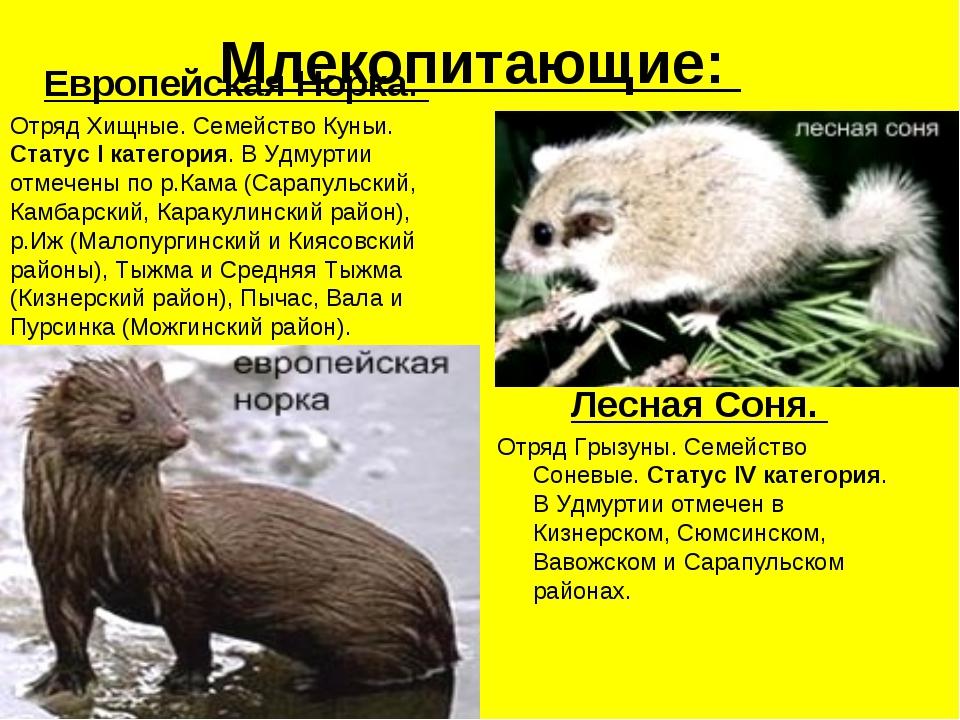 Млекопитающие: Европейская Норка. Отряд Хищные. Семейство Куньи. Статус I кат...