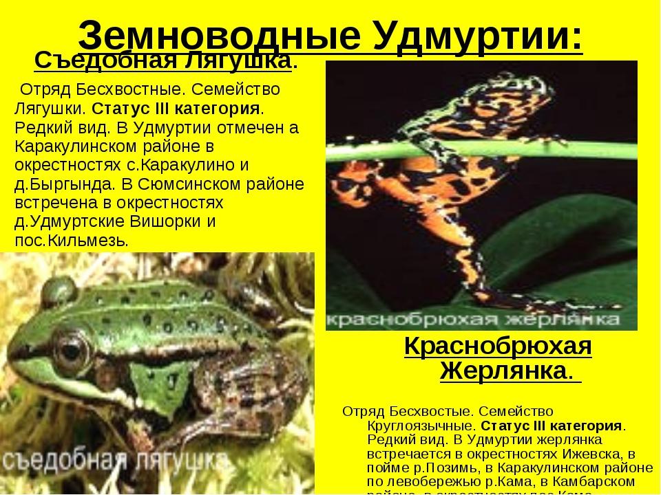 Земноводные Удмуртии: Съедобная Лягушка. Отряд Бесхвостные. Семейство Лягушки...