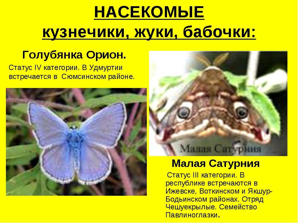 НАСЕКОМЫЕ кузнечики, жуки, бабочки: Голубянка Орион. Статус IV категории. В У...