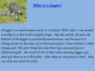 A haggis is a small animal native to Scotland. Well, when I say animal, actu