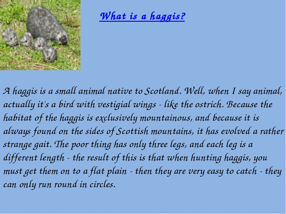 A haggis is a small animal native to Scotland. Well, when I say animal, actu...