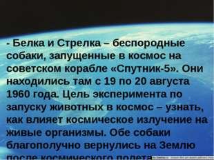 - Белка и Стрелка – беспородные собаки, запущенные в космос на советском кора