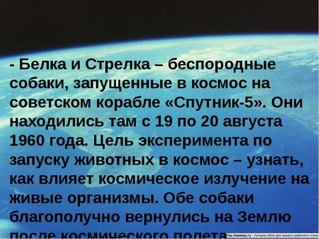 - Белка и Стрелка – беспородные собаки, запущенные в космос на советском кора...