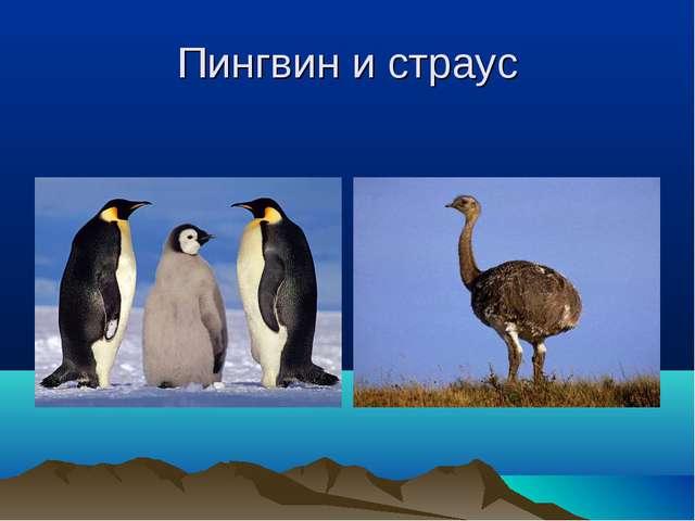 Пингвин и страус