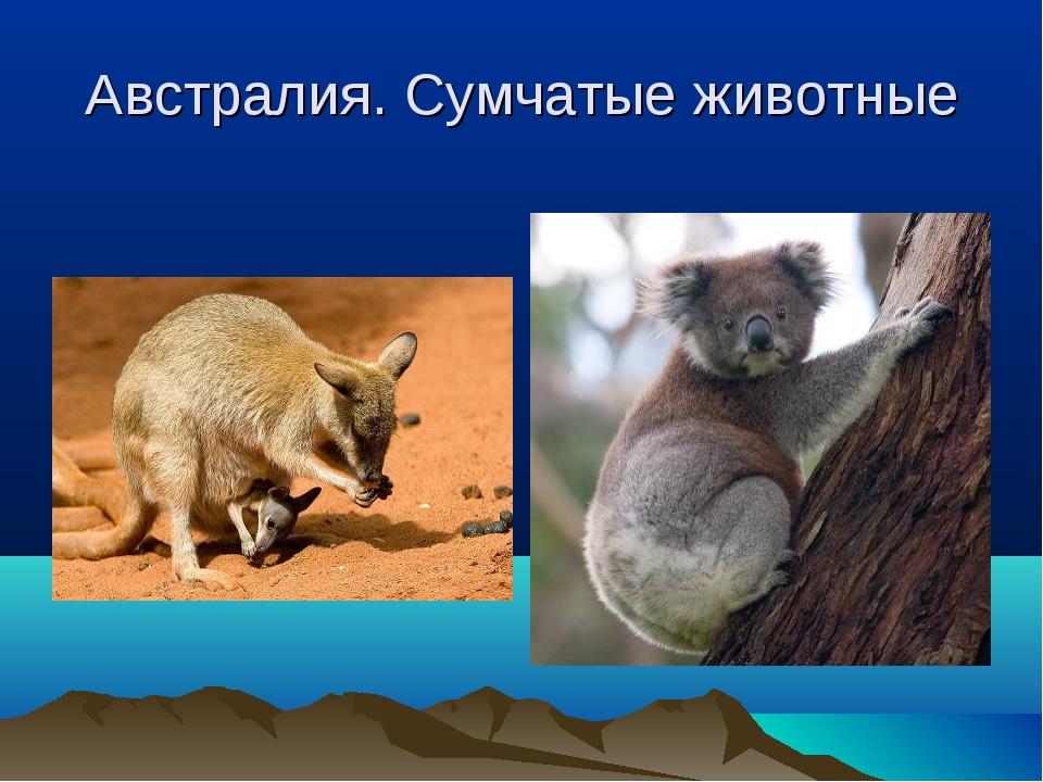Австралия. Сумчатые животные