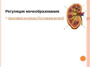 Регуляция мочеобразования Анатомия человека Регуляция мочеобразования (1).mp4