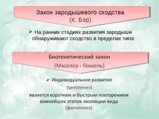 Закон зародышевого сходства (К. Бэр) На ранних стадиях развития зародыши обна