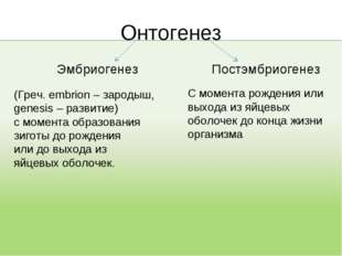 Онтогенез Эмбриогенез (Греч. embrion – зародыш, genesis – развитие) с момента
