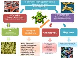 Сапротрофы питаются веществами живых тел (менингококки, гонококки) Питание б