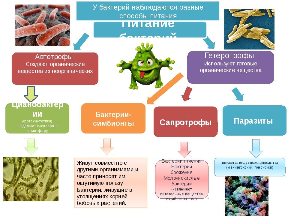 Сапротрофы питаются веществами живых тел (менингококки, гонококки) Питание б...