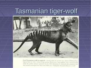 Tasmanian tiger-wolf