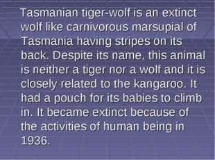Tasmanian tiger-wolf is an extinct wolf like carnivorous marsupial of Tasman
