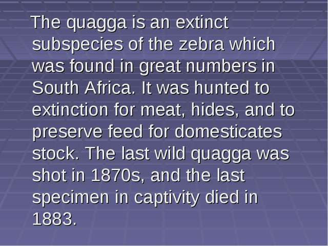 The quagga is an extinct subspecies of the zebra which was found in great nu...