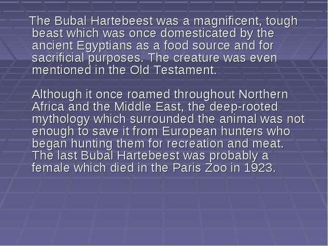 The Bubal Hartebeest was a magnificent, tough beast which was once domestica...