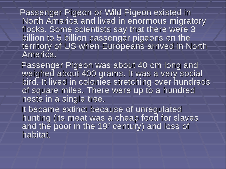 Passenger Pigeon or Wild Pigeon existed in North America and lived in enormo...