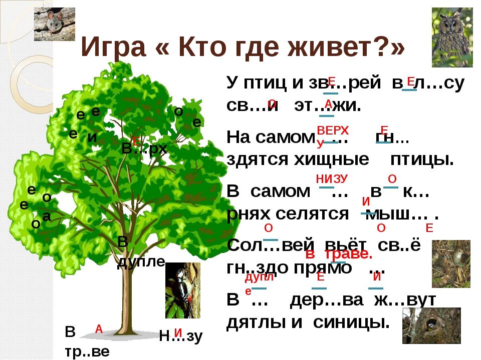 Игра « Кто где живет?» У птиц и зв…рей в л…су св…и эт…жи. На самом … гн…здятс...
