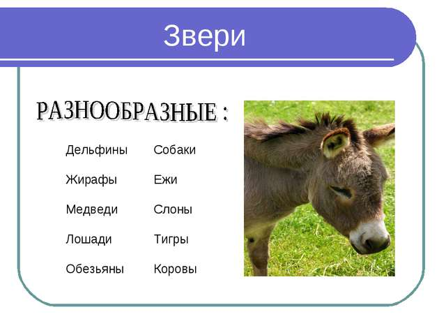 Звери Дельфины Жирафы Медведи Лошади Обезьяны Собаки Ежи Слоны Тигры Коровы