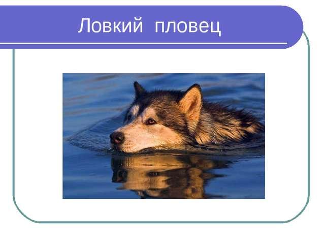 Ловкий пловец