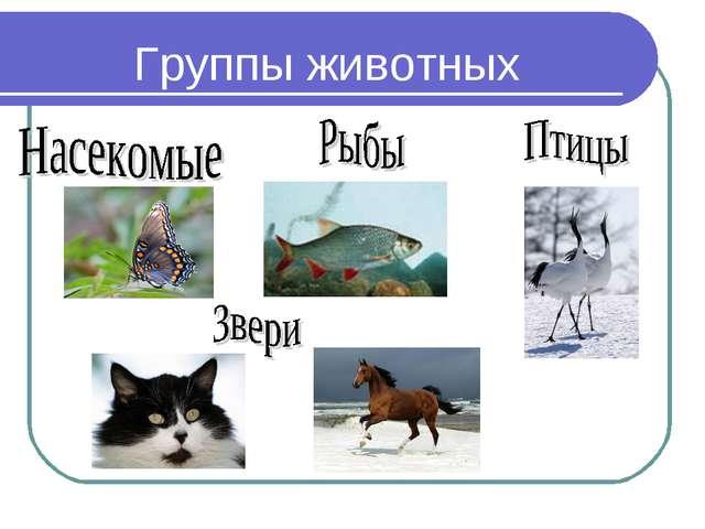 Группы животных