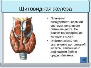 Щитовидная железа Повышает возбудимость нервной системы, регулирует обмен вещ