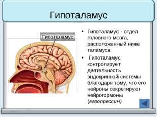 Гипоталамус Гипоталамус - отдел головного мозга, расположенный ниже таламуса.