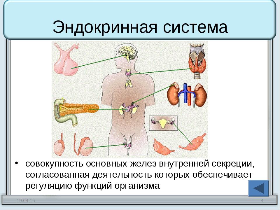 Эндокринная система совокупность основных желез внутренней секреции, согласов...