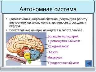 Автономная система (вегетативная) нервная система, регулирует работу внутренн