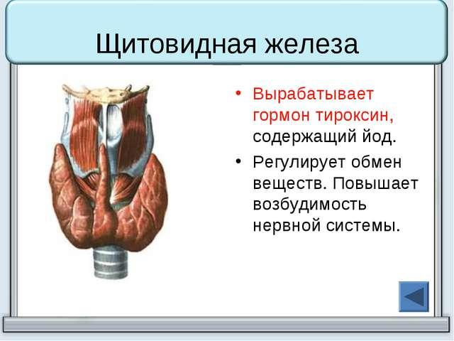 Щитовидная железа Вырабатывает гормон тироксин, содержащий йод. Регулирует об...