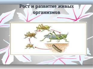 Рост и развитие живых организмов