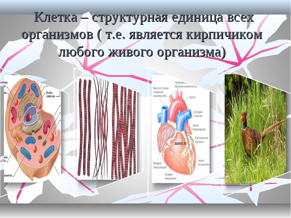 Клетка – структурная единица всех организмов ( т.е. является кирпичиком любо...