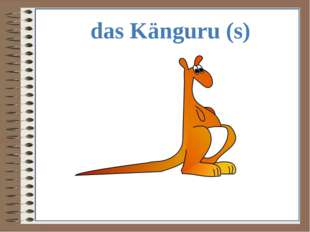 das Känguru (s)