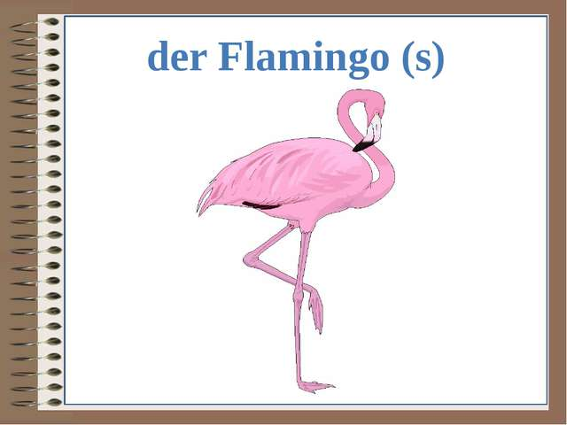 der Flamingo (s)
