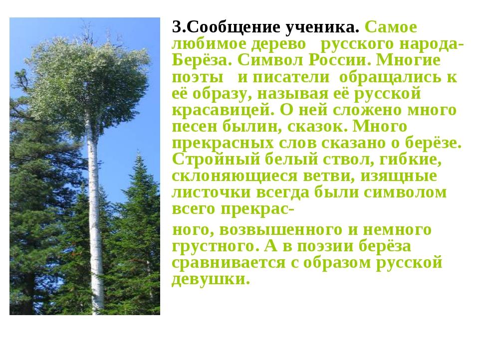 3.Сообщение ученика. Самое любимое дерево русского народа- Берёза. Символ Ро...