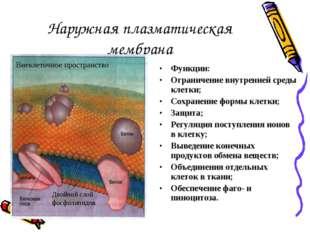 Наружная плазматическая мембрана Функции: Ограничение внутренней среды клетки