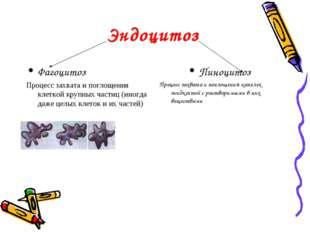 Эндоцитоз Фагоцитоз Процесс захвата и поглощения клеткой крупных частиц (иног