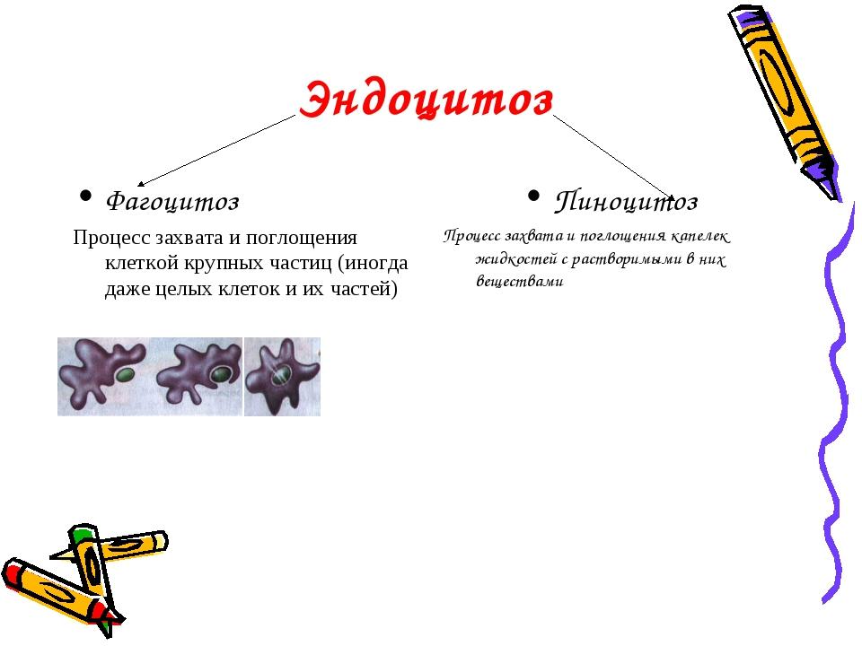 Эндоцитоз Фагоцитоз Процесс захвата и поглощения клеткой крупных частиц (иног...